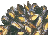 a clump of mussel (image)